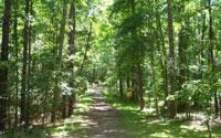 Duke Forest Durham