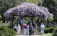 Raleigh Recreation  Duke Gardens