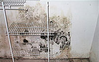 Mold Inspection Buyers