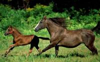 Black Horse Run Homes